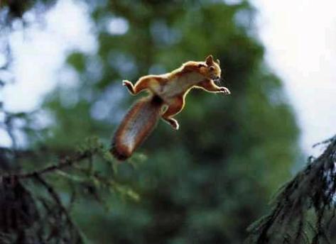 leapingsquirrel